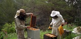 Bees Extinction, Solving the Mystery
